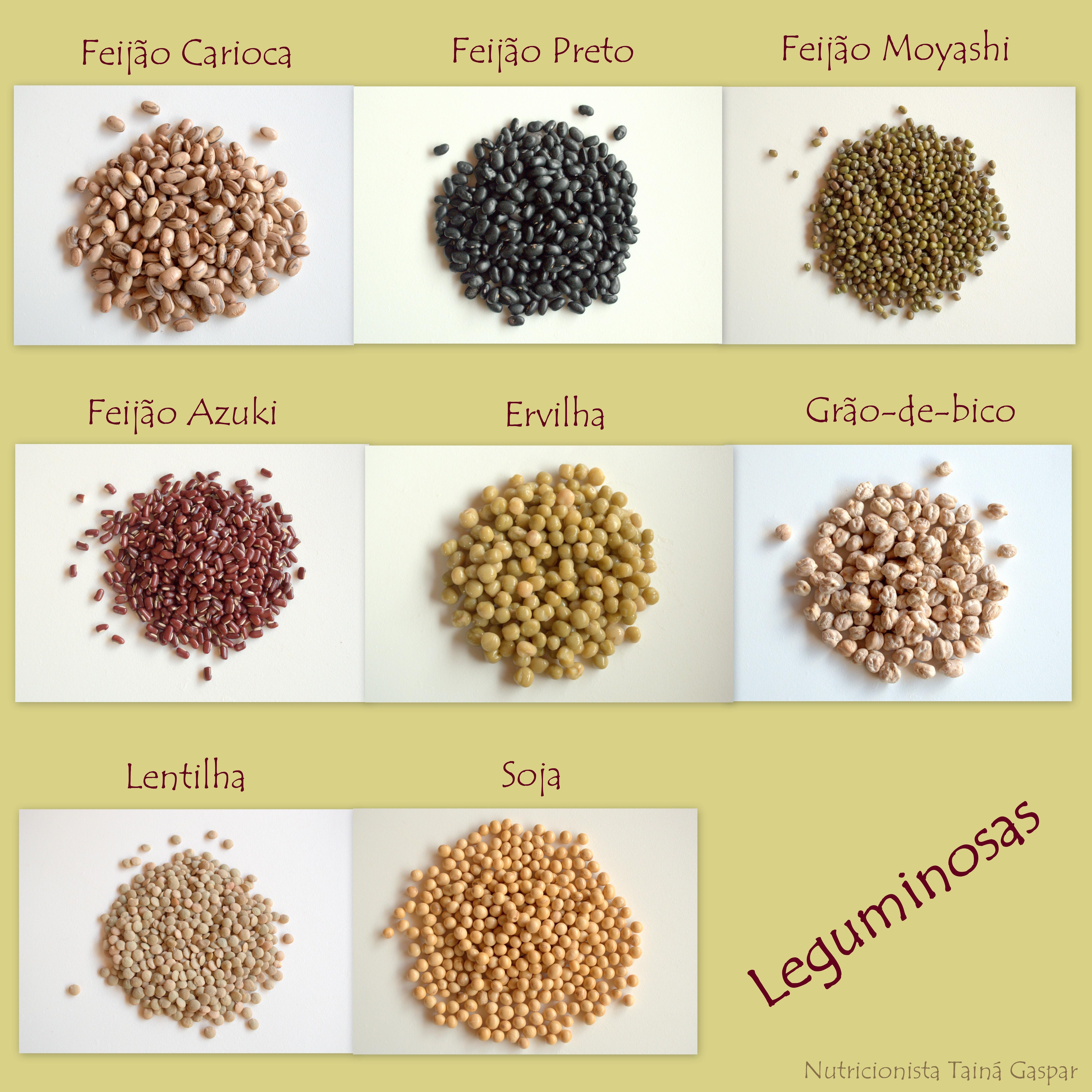 Tipos de leguminosas related keywords tipos de - Tipos de plantas ...