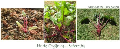 Horta6